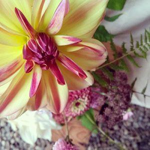 Dahlia jaune et rose par Écru Fleurs